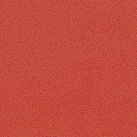 30316-Carissima-Orange